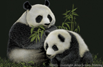AT003G - Magnets, Small - Giant Pandas