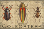 EN066G - Magnets, Small - Vintage Coleoptera