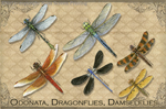 EN071G - Magnets, Small - Vintage Odonata