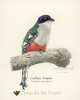 OT01 - T-Shirts, Adult - Cuban Trogon - Priotelus temnurus