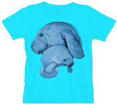 WC245N - T-Shirts, Ladies Scoop-Neck - Manatee Hug