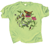 WC447K - T-Shirts, Youth - Butterfly Lifecycle