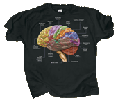 WC462T - T-Shirts, Adult - Brain