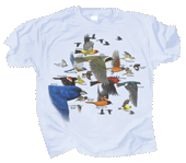 WC510T - T-Shirts, Adult - Bird Migration