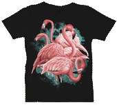 WC636N - T-Shirts, Ladies Scoop-Neck - Flamingo Dancers