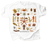 WC698T - T-Shirts, Adult - Ultimate Marine Invertebrates