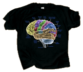 WC720T - T-Shirts, Adult - Glow Brain