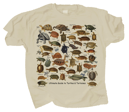 Ultimate Turtles & Tortoises