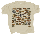 WC728T - T-Shirts, Adult - Ultimate Turtles & Tortoises