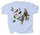 WC767T - T-Shirts, Adult - Eastern Birds